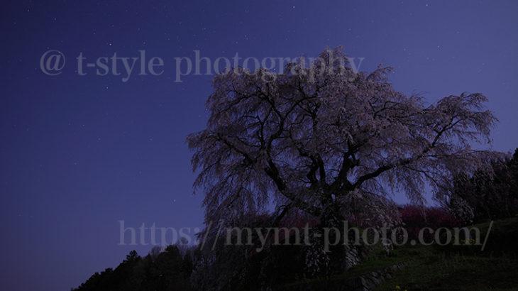 月夜の又兵衛桜