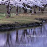 奈良県南部の桜並木が超絶美しかった話をしてみる