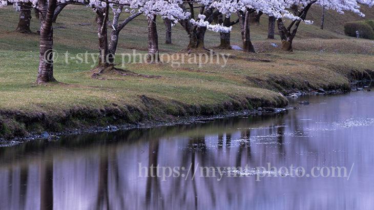 奈良県下北山村の桜並木とリフレクション