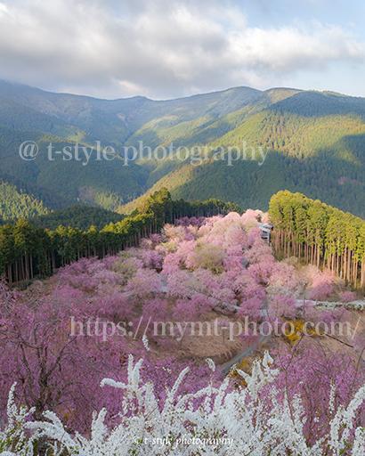 高見の郷の枝垂れ桜と雪景色