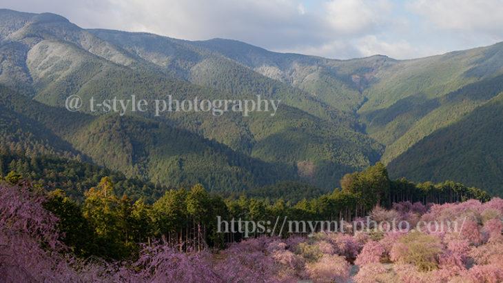 高見の郷で枝垂れ桜と雪のコラボを撮ってきた!