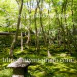京都にある祇王寺の新緑が美しすぎる!!