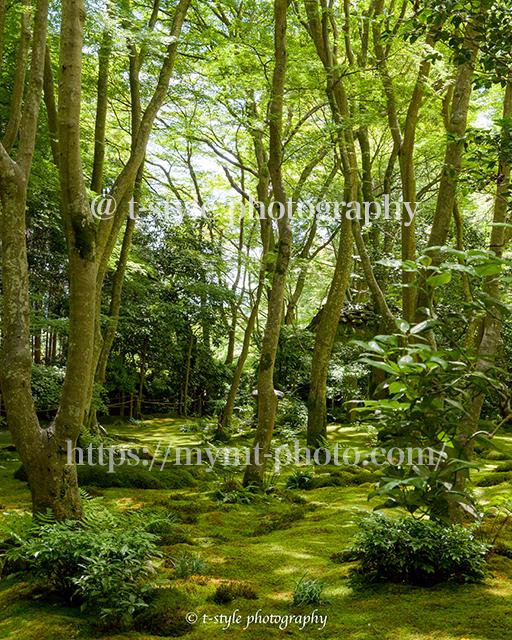 新緑の京都祇王寺