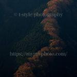 まさに昇り龍!絶景すぎるナメゴ谷の紅葉