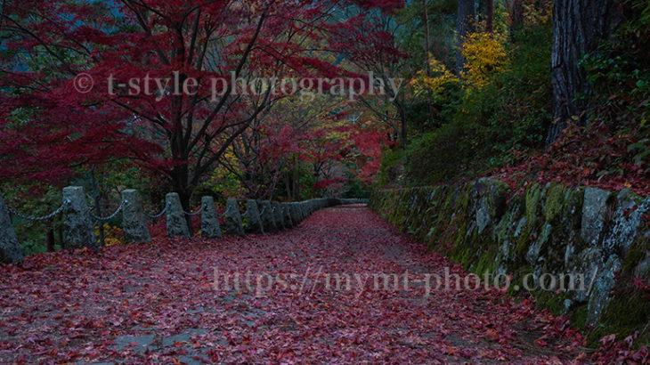吉野山にある高城山展望台の紅葉絨毯を撮ってきた