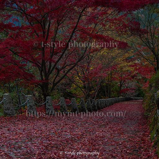 吉野山にある高城山展望台の紅葉絨毯