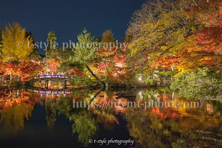 禅林寺永観堂の紅葉ライトアップ