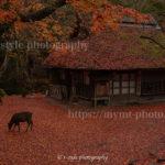 奈良公園の紅葉を撮影してきました