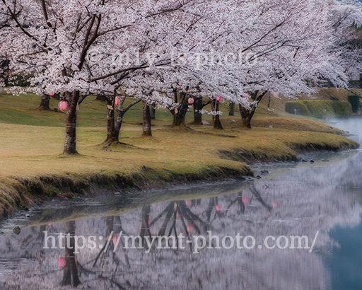 満開の桜とリフレクション