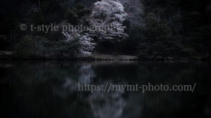 水辺の桜をカッコよく撮ってみる