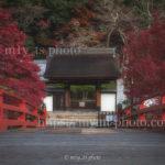 秋の室生寺は見事な紅葉でした