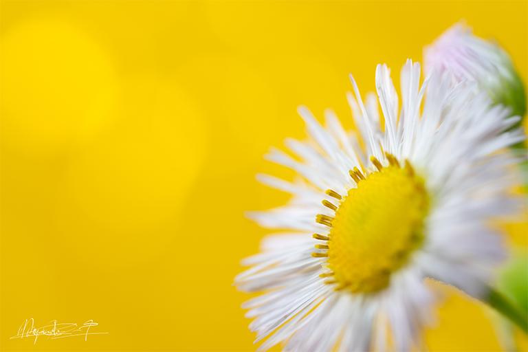 マクロ撮影した花